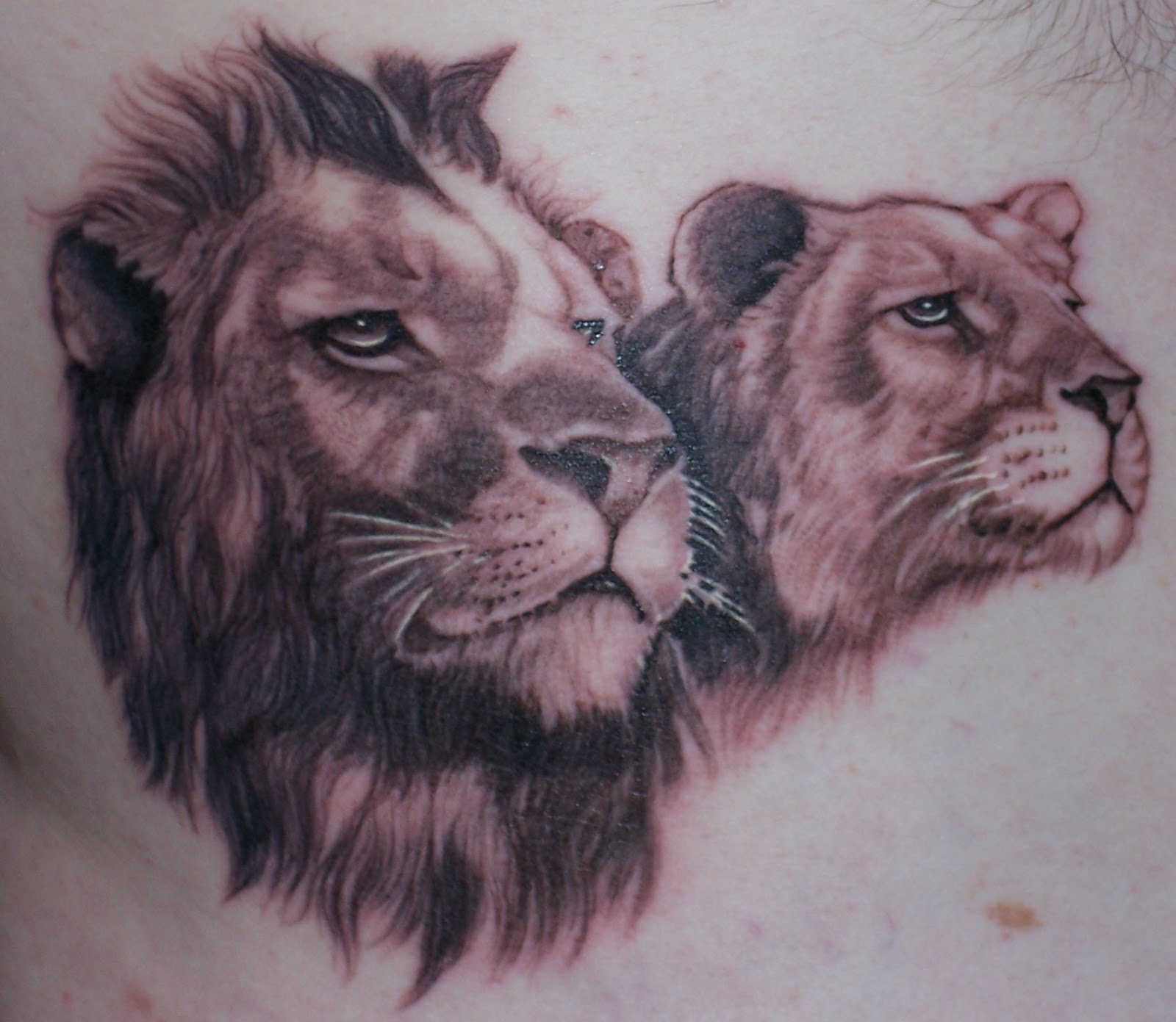 Rusty Wisdom Lion And Lioness Tattoo By Pat At Pacific Ink Terrigal