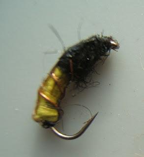les amis de la belle z br e la larve de trichopt re sans fourreau porte bois. Black Bedroom Furniture Sets. Home Design Ideas