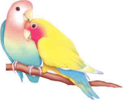 http://3.bp.blogspot.com/_NCdX-k-on2c/SjN3dkNH9SI/AAAAAAAACNs/QWnKYYTD1fE/s400/lovebirds1.jpg