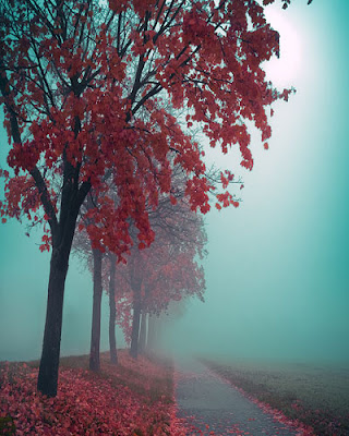 Autumn-in-red-1.jpg