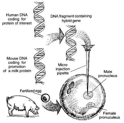 definiton of genetic engineering and history There are three types of human genetic engineering:  history hobbies & games  future generations can inherit the changes from germline engineering, whereas.