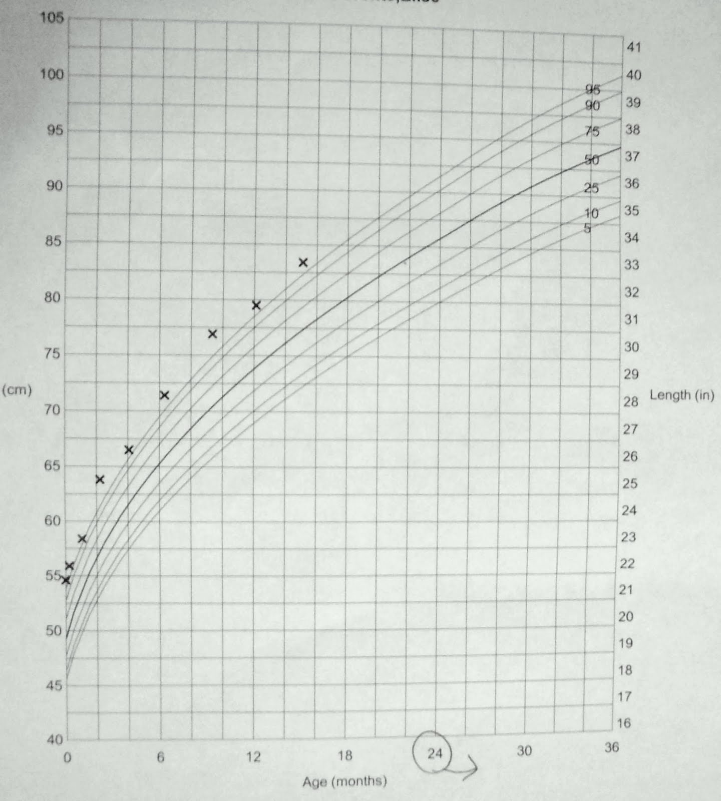 Male Lab Growth Chart How To Enlarge Pennis Size Naturally At Home