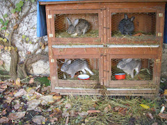 les lapins dans leur clapier