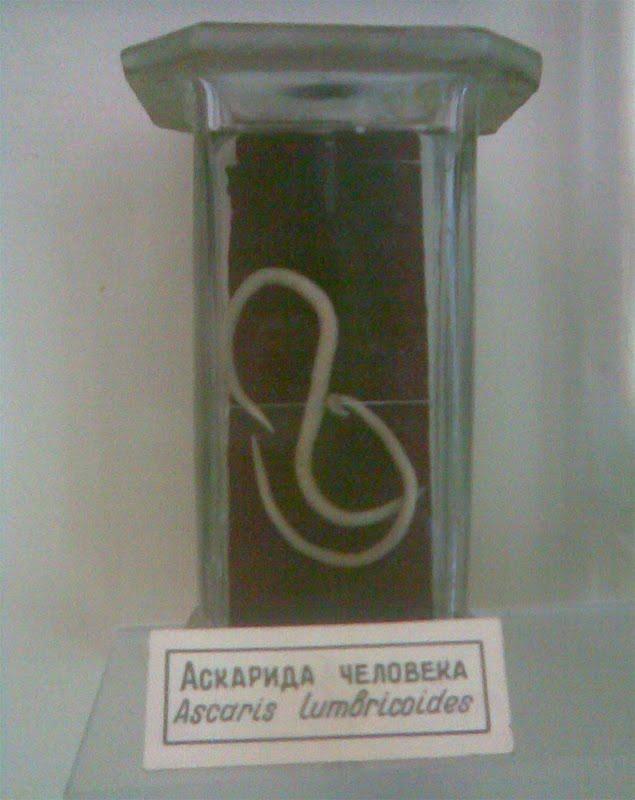 синева анализы Лаборатории Минска, лабораторная диагностика и анализы в.