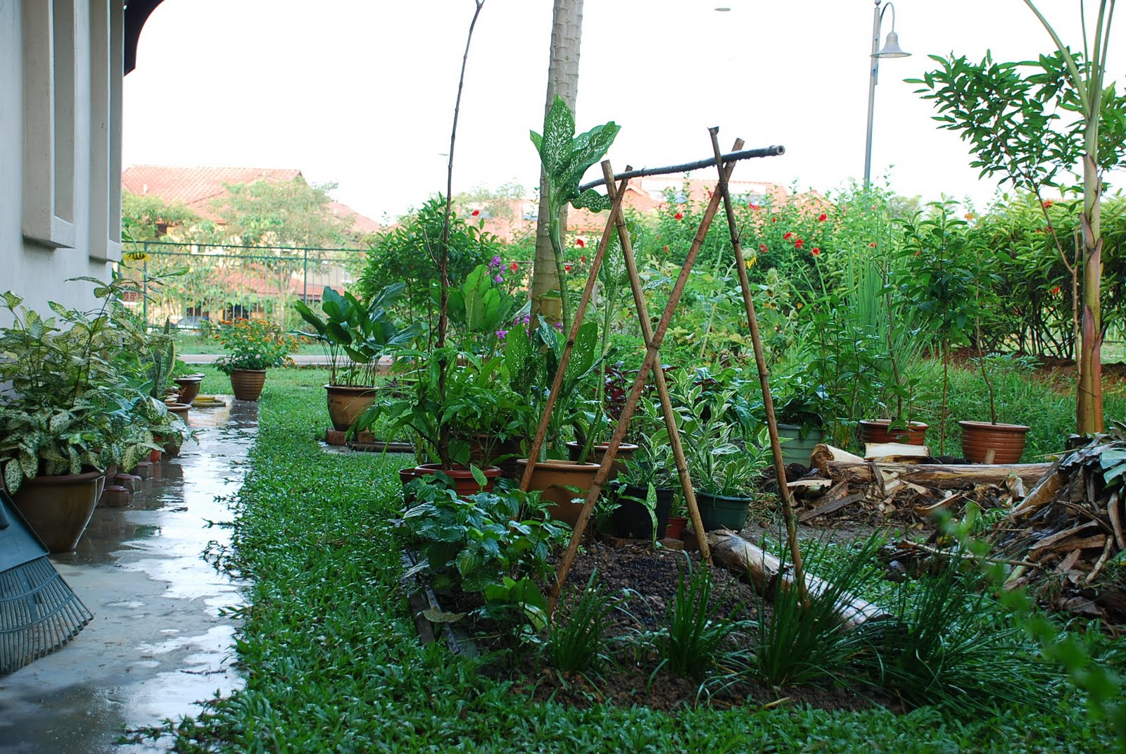 My little vegetable garden Cucumber on beds and trellis