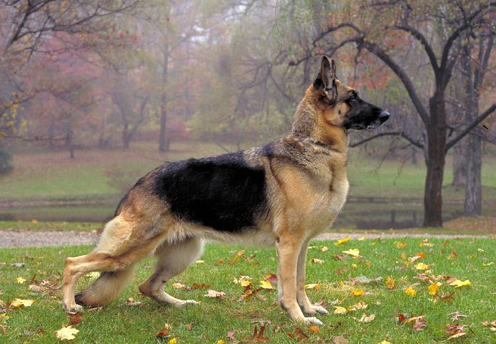 Lala Buzz: Top 10 Dog Breeds in America