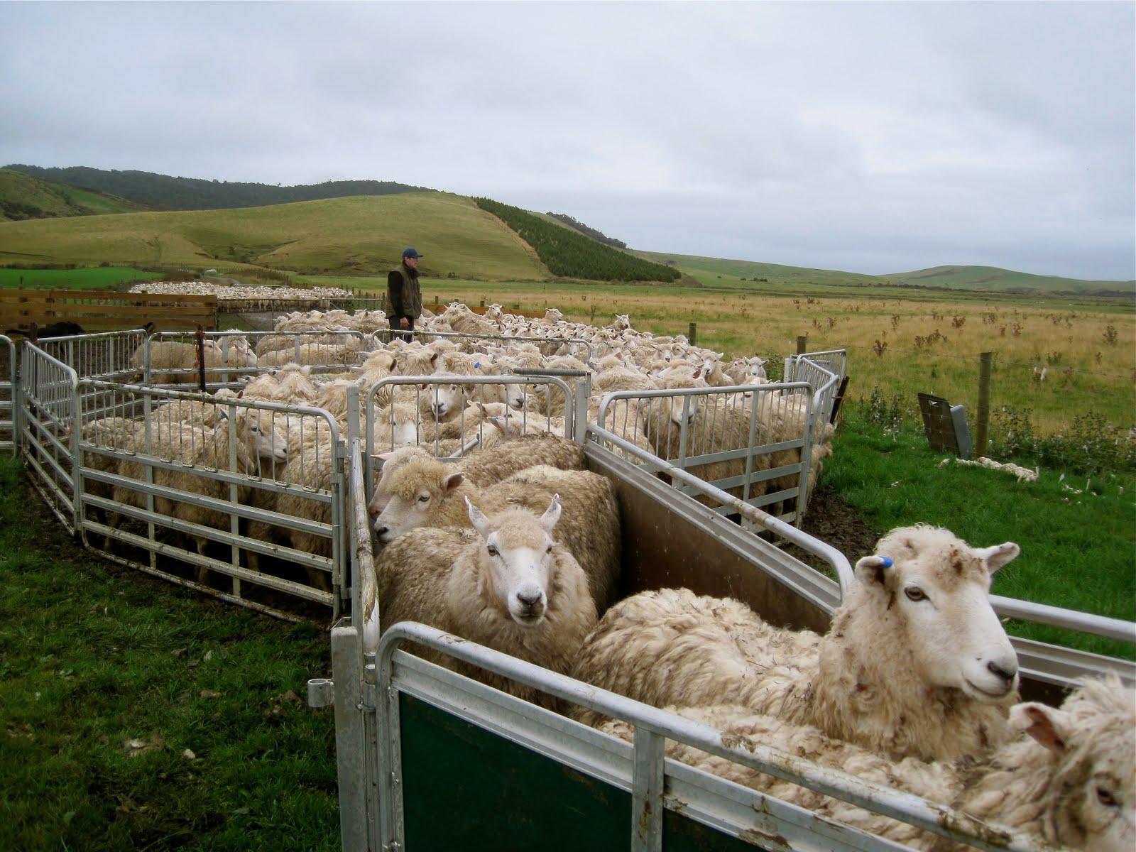 LAPAHIE.com 6.5 \\ Sheep corral east of Shiprock Pinnacle (Tsé Bit ...