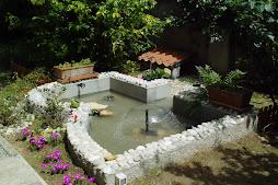 Tartabull tartarughe acquatiche habitat for Stagno per tartarughe