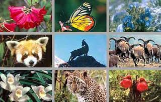 Keanekaragaman+hayati+tingkat+ekosistem