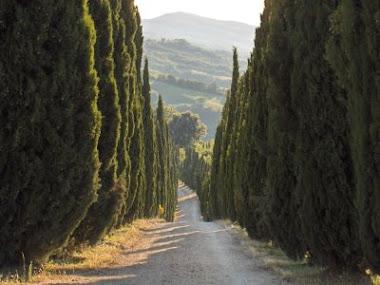 Ciprestes Toscania
