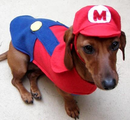 Dogs Wearing Costumes Cute Pictures Of Dogs In Costumes 101710