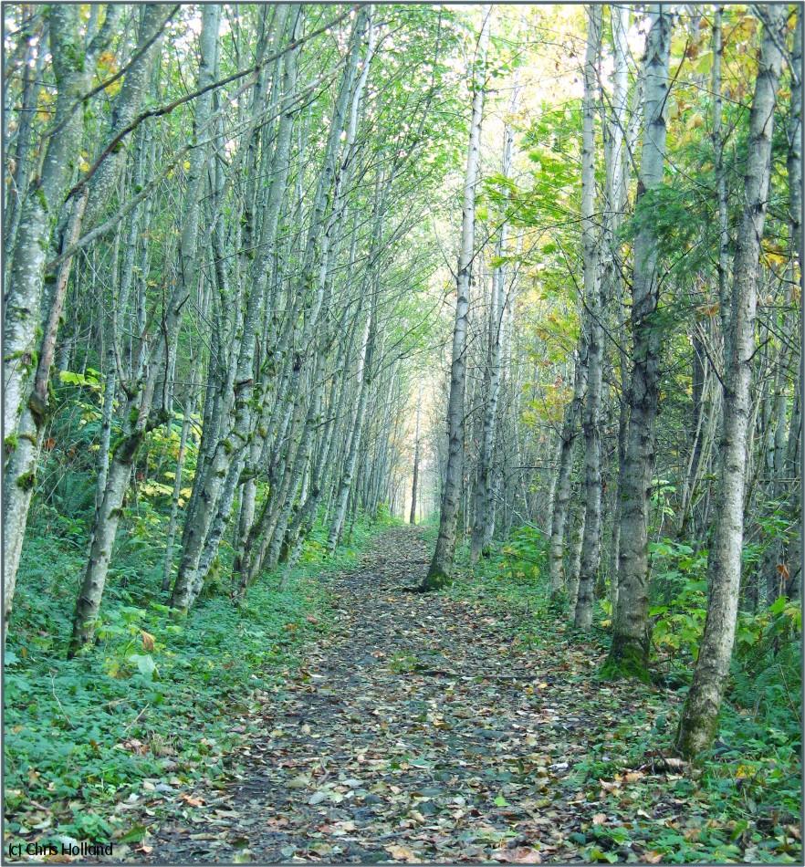[Autumn+Walk.jpg]