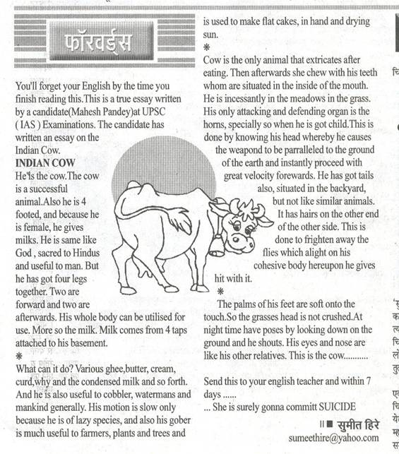 essay on cow in english for kids