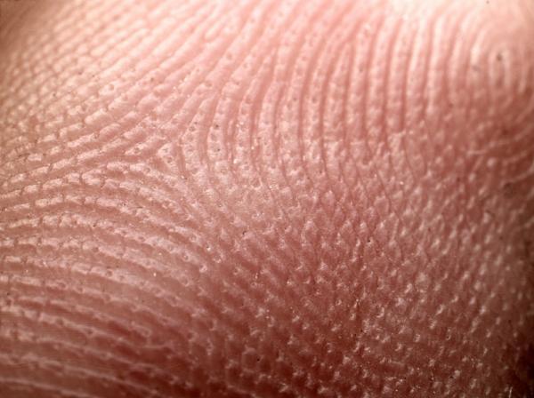 Utilidad de nuestra piel