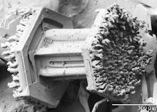 MICROFOTOGRAFÍA