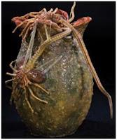 origenes del alien Egg+alien