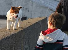 The Dog!