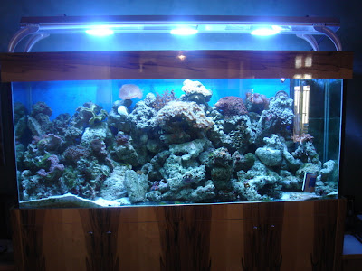 SALTWATER AQUARIUM SETUP: 1 Way For Your Saltwater Aquarium Setup ...