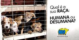 Diga não à crueldade contra os animais