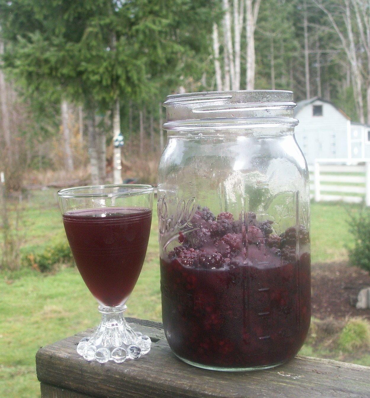 The Alchemist: Homemade Blackberry Liqueur