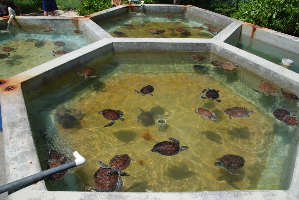 Burdin 39 S Family In Usa Turtle Farm