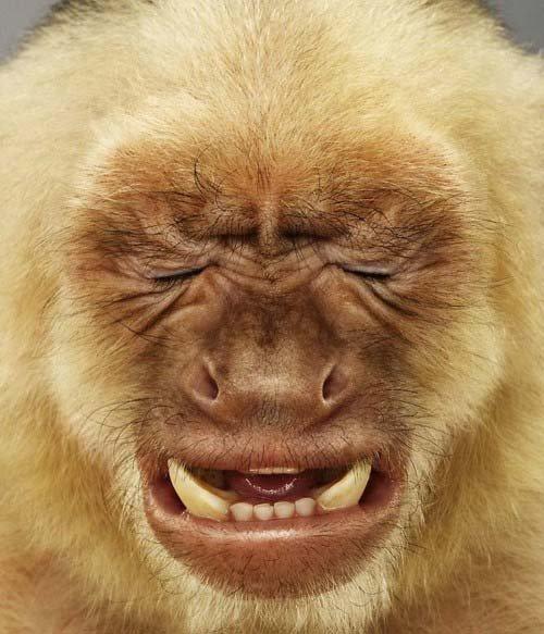 postulación Lloron-primate