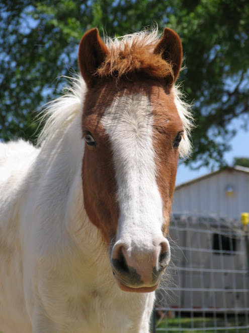Sweet pony rescued by Safe Haven