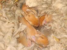 Spang Babies