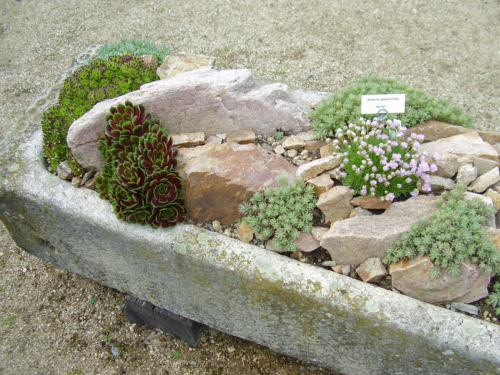 Gardenless gardener rock garden ideas for Stone landscaping ideas