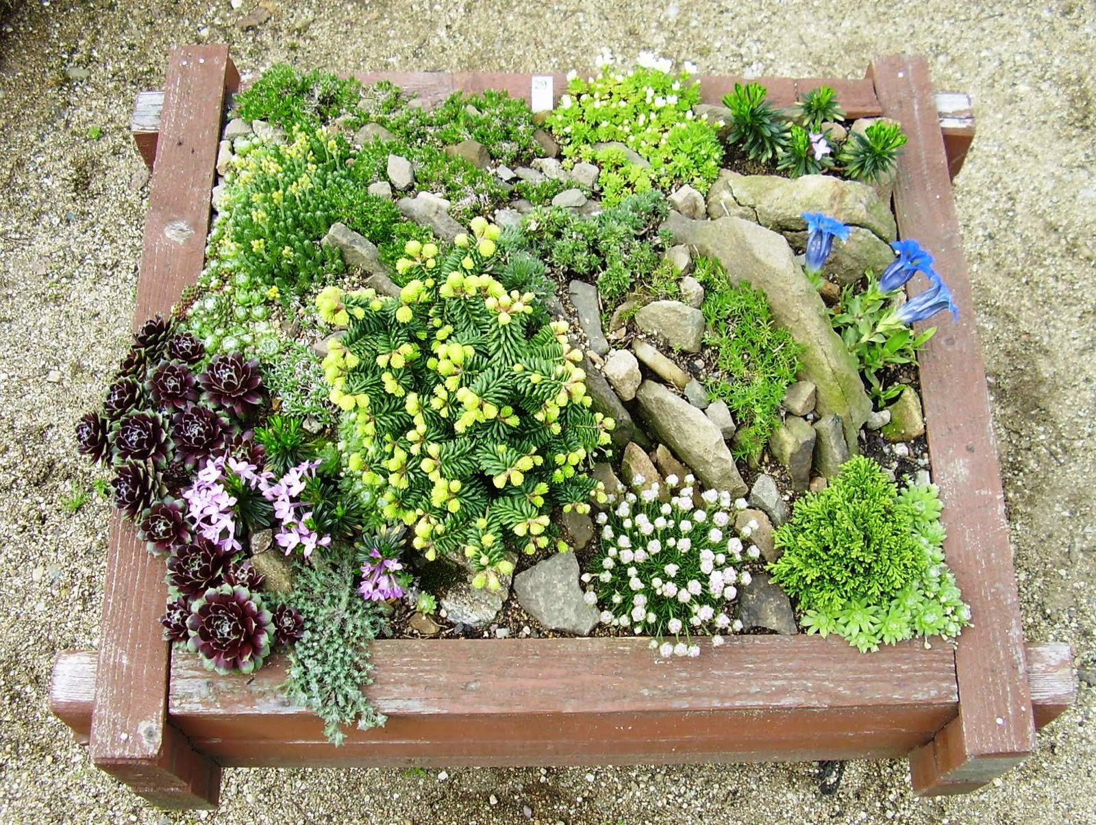 Gardenless gardener rock garden ideas for Tiny garden ideas