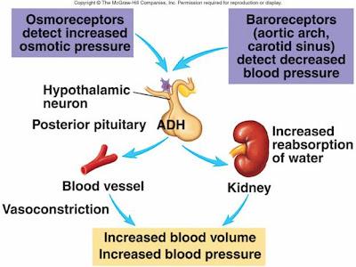 the blood pressure cure kowalski pdf