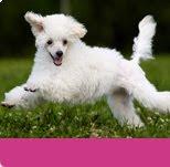 como prevenir la ansiedad por separacion en los perros