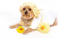 como bañar tu perro