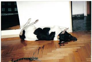 El Diario de Un Perro 2 (1ª Parte)