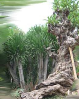 Agar Buahnya Besar Besar Dan Pohonnya Tinggi Tanaman ...