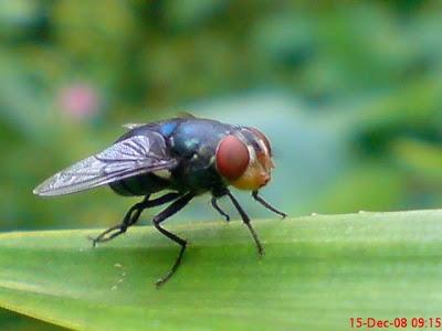 http://3.bp.blogspot.com/_NYqYx2qGl4o/TQVOki6BfXI/AAAAAAAAIEU/n9kCnx8tUxk/s1600/lalat-hijau-di-daun-pandan.jpg