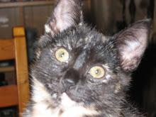 Katten Sally