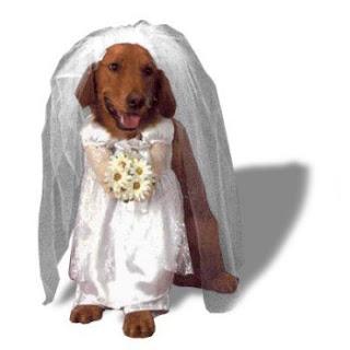tout sur le mariage costumes de mari s pour chiens. Black Bedroom Furniture Sets. Home Design Ideas