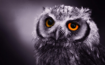 Owl Face Wallpaper