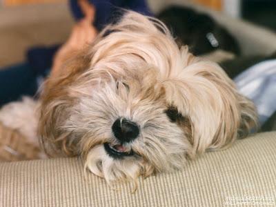 Dog Picture - Dog Pics