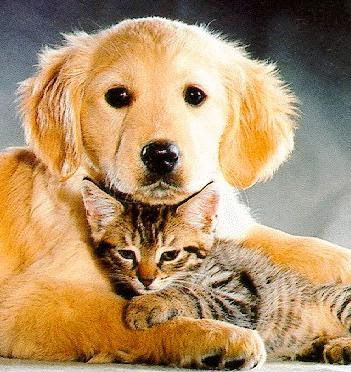 best wallpaper cards photo pic facebook cover wallpaper dog and cat 351x372