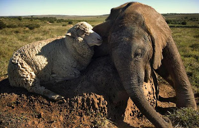 the world's most unusual animal friendships