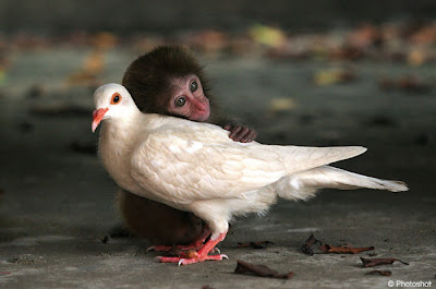 Bird Monkey now Friends