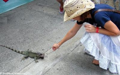 Pet Care Information Image of iguana