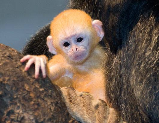 Cute baby animal pictures - photo#18