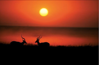 Sunset Wild Animals Photo