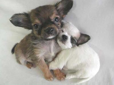 Innocent Baby Animals Photo