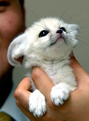 Cute Innocent Puppy Picture