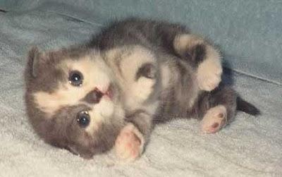 Tiny Baby Kitten Pics