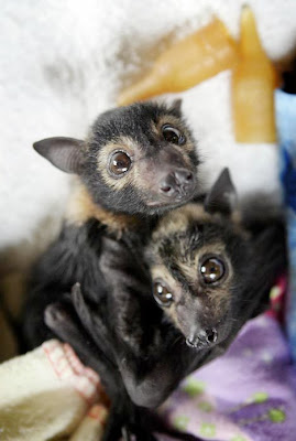Cute Baby Bat Photo